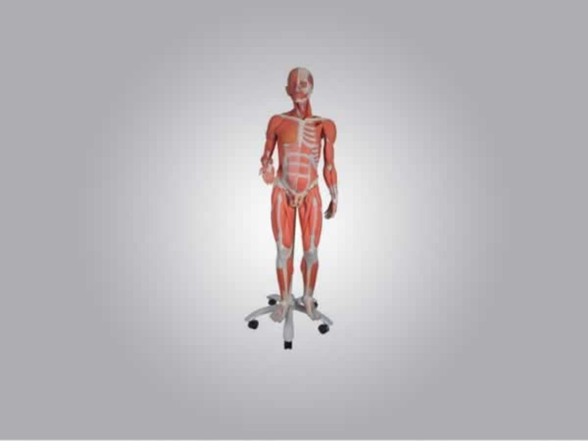 Itabira - Figura muscular com sexo B55  Nota fiscal 000173.  ==> IMPORTANTE: O primeiro le...